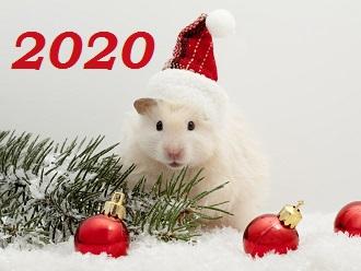 в_чем_встречать_новый_год_2020